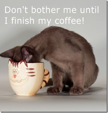 pmb-cat-tuesday